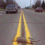 Roadkill Nation
