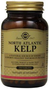 north-atlantic-kelp